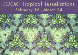 LOOK: Tropical Tessellations