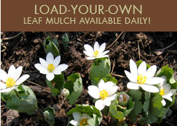 Load Your Own Leaf Mulch