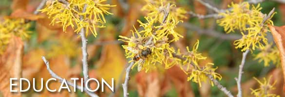 Education, bee on flowering tree