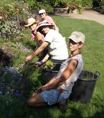 volunteers working in the garden